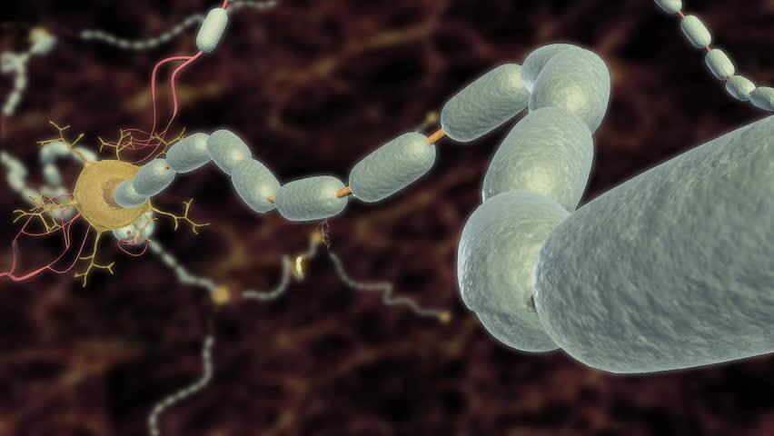 Axon_myelinated